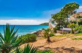 Beautiful Island Scenery, Coastline Of Sant Elm With Idyllic Sea View, Majorca Balearic Islands, Spa poster