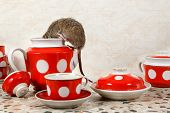 Closeup One Rat (rattus Norvegicus) Climbs Into Teapot Near Red Cups On  Countertop At Kitchen In An poster