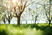 Bright ornamental garden with blooming lush trees on a sunny day. Concept of the ecology. Soft focus poster