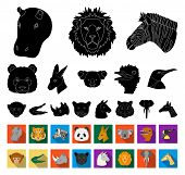 Wild Animal Black, Flat Icons In Set Collection For Design. Mammal And Bird Vector Symbol Stock Web  poster