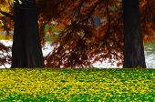 Yellow Colorful Autumn Leaves Fallen On A Green Grass Lawn, Over A Soft Focus Blurred Background Of poster