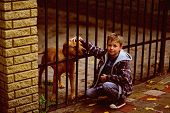 Enjoy Being My Pet Dog. Little Boy Adopt Pet Dog From Animals Shelter. Little Boy Play With Pet Dog. poster