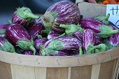 picture of farmers market vegetables  - This is an image of a basket of eggplants at a farmers market - JPG