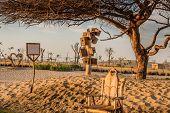 Barbeque Area In The Love Lakes Dubai. A New Tourist Destination In The Vicinity Of Al Qudra Lakes D poster