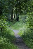 Good Forest Path For Walks. Good Forest Path For Walks In The Quiet Hour poster