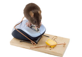 picture of pest control  - a mouse used his computer sibling to get to the cheese - JPG