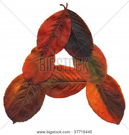 Autumns Leaves Letter A