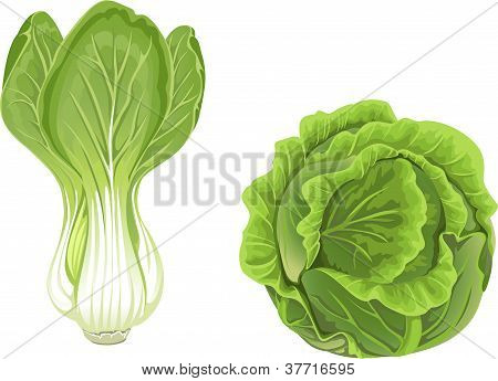 Head of green cabbage and lettuce