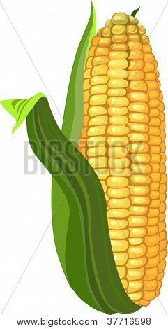 ripe ear of corn - illustration of healthy nutrition