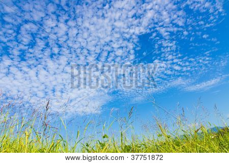 Autumn Sky And The Grass