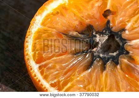 Rotten Orange With Mold