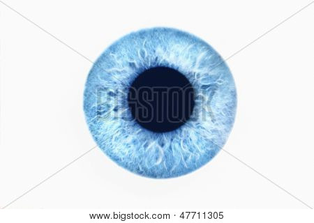 Closeup of blue eye on white background