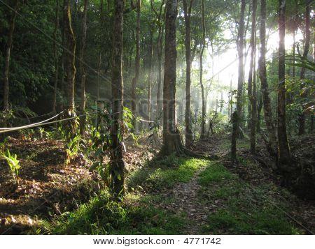 Bosque Glade