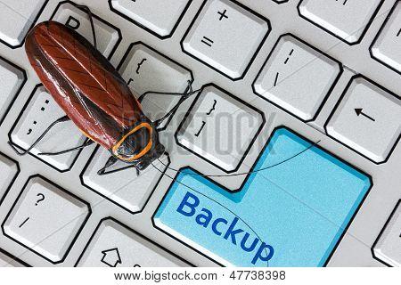 Bug On The Computer Keybord