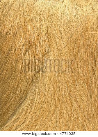 Red Fur 2