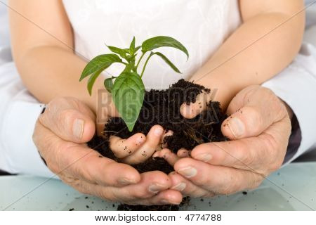 Child And Adult Hands Holding New Plant