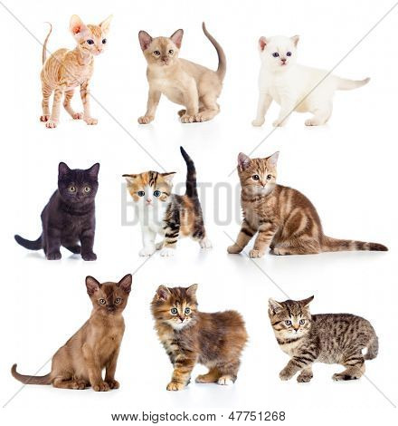 Different kittens collection