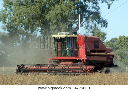 Harvesting Soybean Field