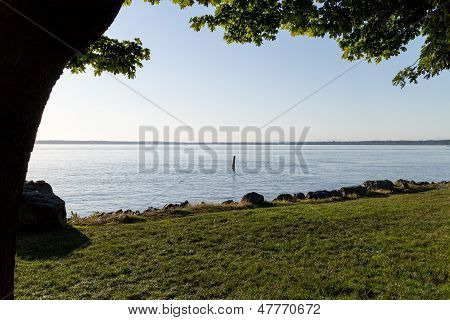 Bellingham Bay-tree Foreground