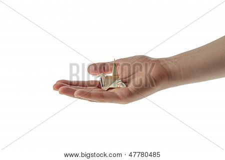 Origami Euro Money Woman Hands