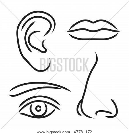 Vector Illustration Nose, Ear, Mouth And Eye