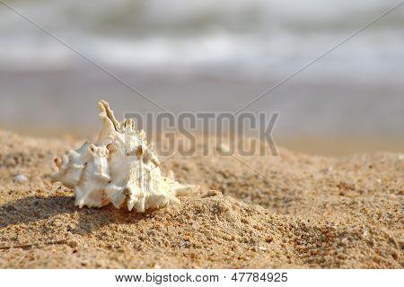 Seashell On A Sandy Beach.