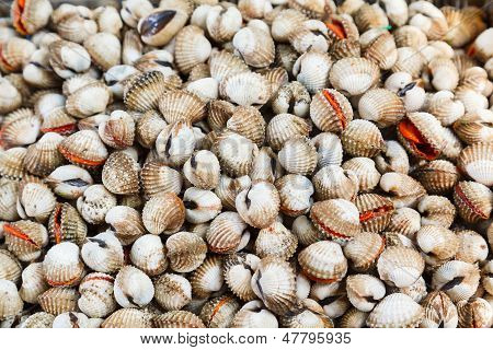 Shellfish Blood Cockles edible background
