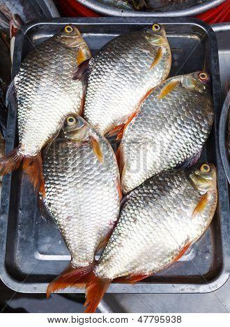 fresh fish rudd on a metal tray