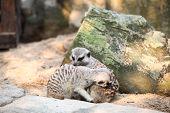 ������, ������: ������� � Dusit Zoo ������� �������