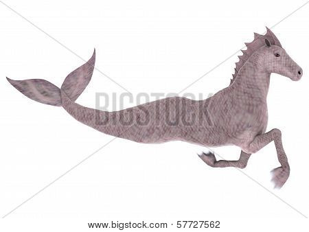 Hippocampus Mermaid's Horse