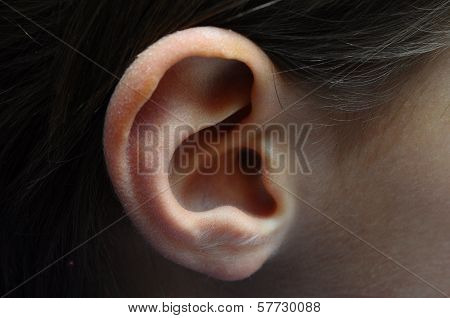 Close Up Of Child Ear