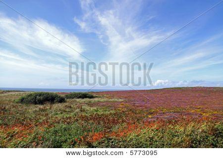 Moor land