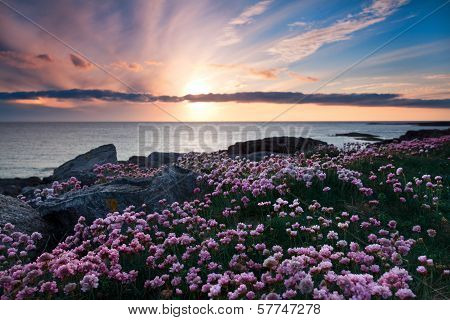 Pink Flowers At Sunset