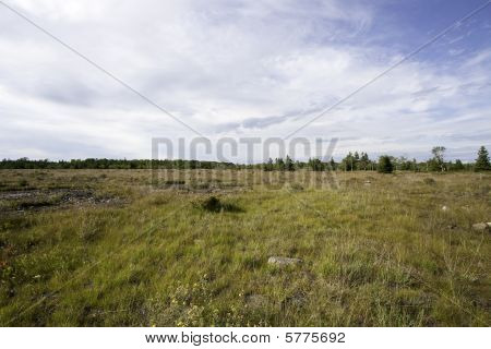 Alvar Grass Land