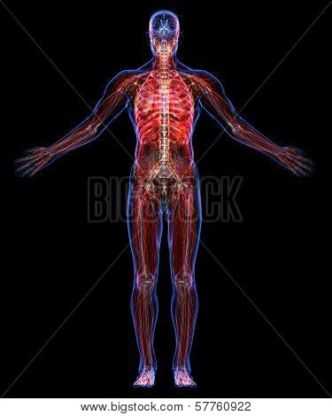 Anatomy Of The Human Body