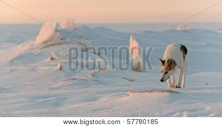 Dog In Winter