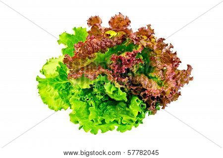 Lettuce Green And Red