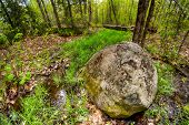 picture of early spring  - The forest comes alive in early spring featuring a massive igneous rock boulder deposited here by glacial movements at the end of last Ice Age - JPG