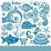 pic of aquatic animal  - Vector set of fish and shells for your business - JPG