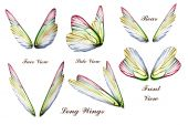 image of faerie  - Set of colored Butterfly or faeries wings - JPG
