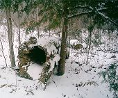 picture of hollow log  - this hollow log looks really pretty in the snow - JPG
