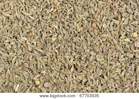 Green Anis Seeds
