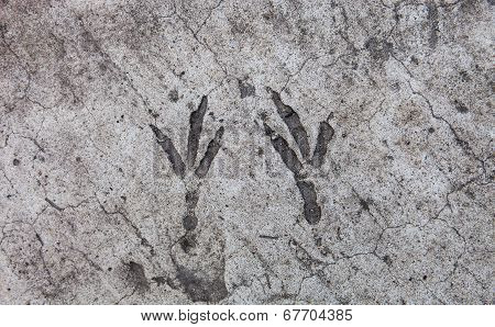 Bird Footprints Hardened On The Concrete Surface