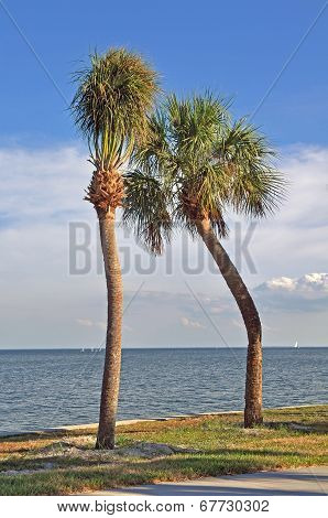 Pair of crooked palm trees