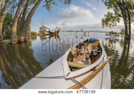 Corgi dog in a decked expedition canoe on a lake in Colorado, a distorted wide angle fisheye lens perspective, Lone Tree reservoir near Loveland, Colorado