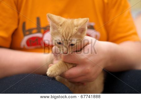 Kitten In The Hands Of The Host