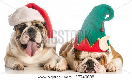 christmas dogs dress like santa and and elf - english bulldog