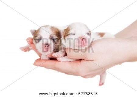 Cute Baby Puppies