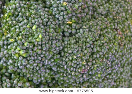 Brocolli verde