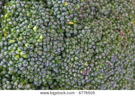 Green Brocolli
